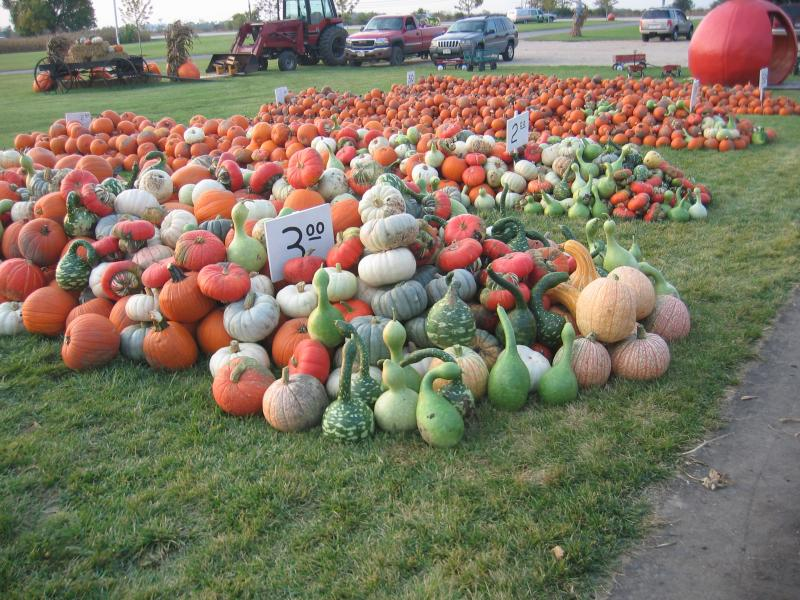 varieties of pumpkins - group picture, image by tag - keywordpictures ... Pumpkin Pie Animated